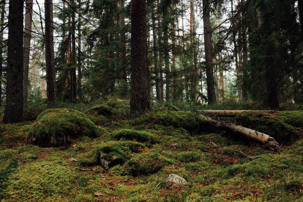 Skinnskatteberg | Kolarbyn Eco Lodge