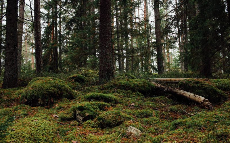 Kolarbyn Ecolodge Forest - Sweden
