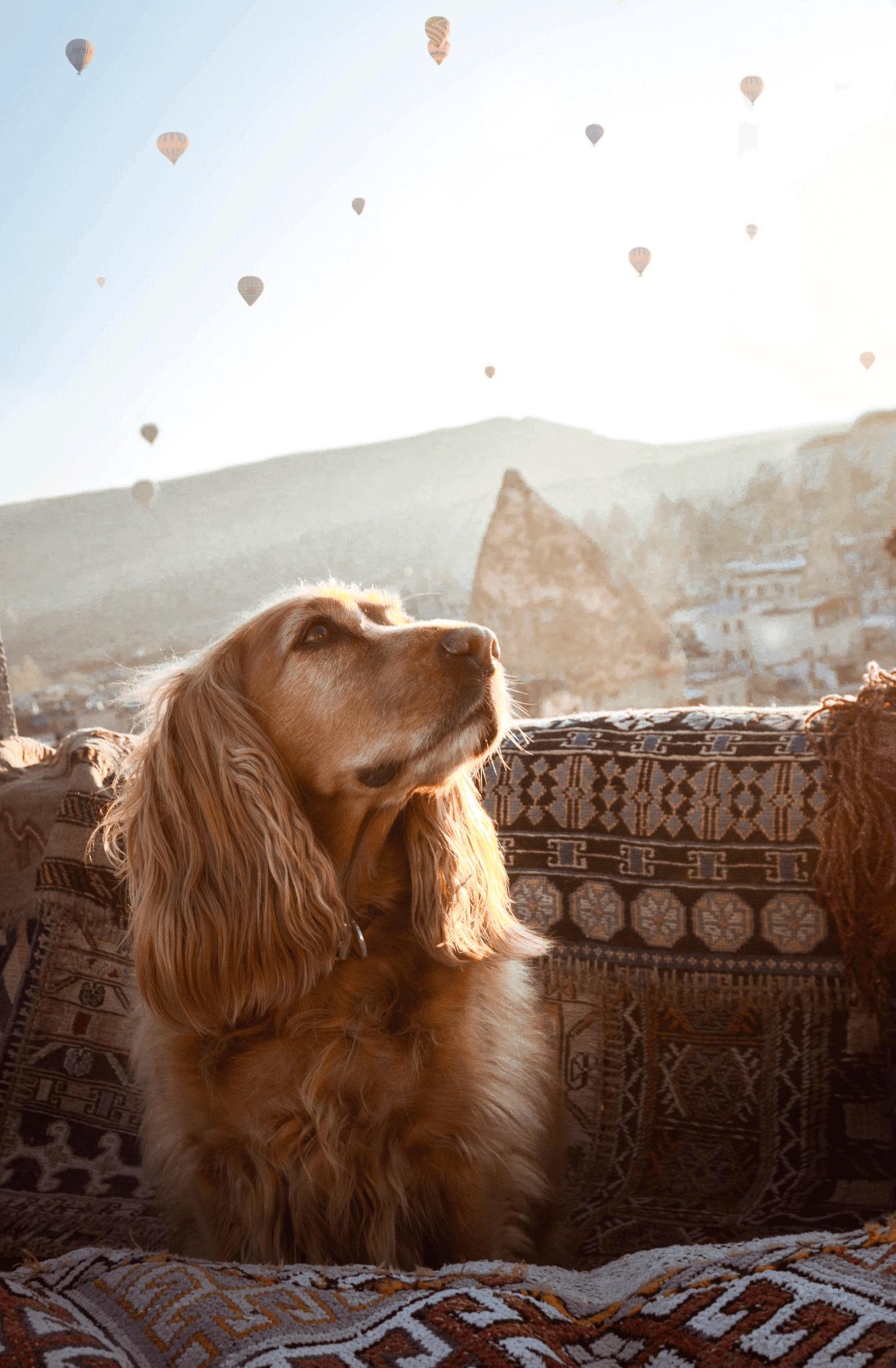 Sultan Cave Suites Cappadocia