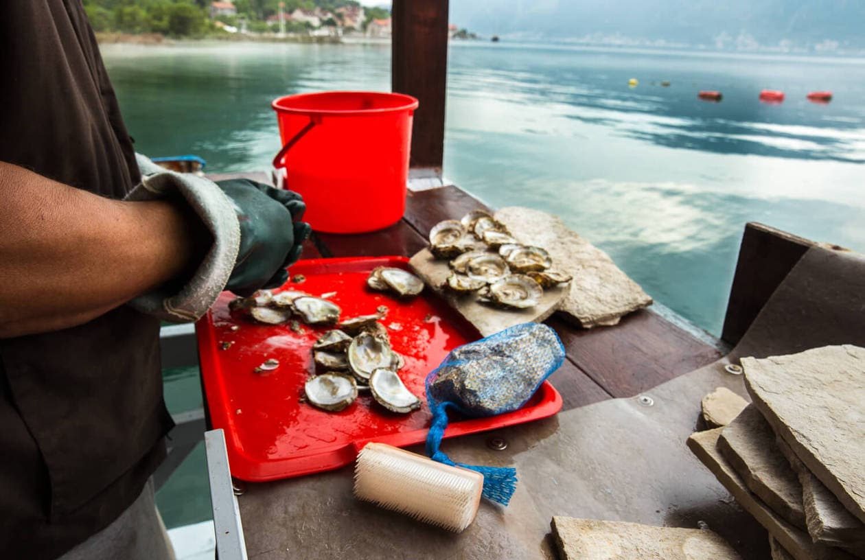 Off the Beaten Path in Montenegro: Sustainable Oyster Farm
