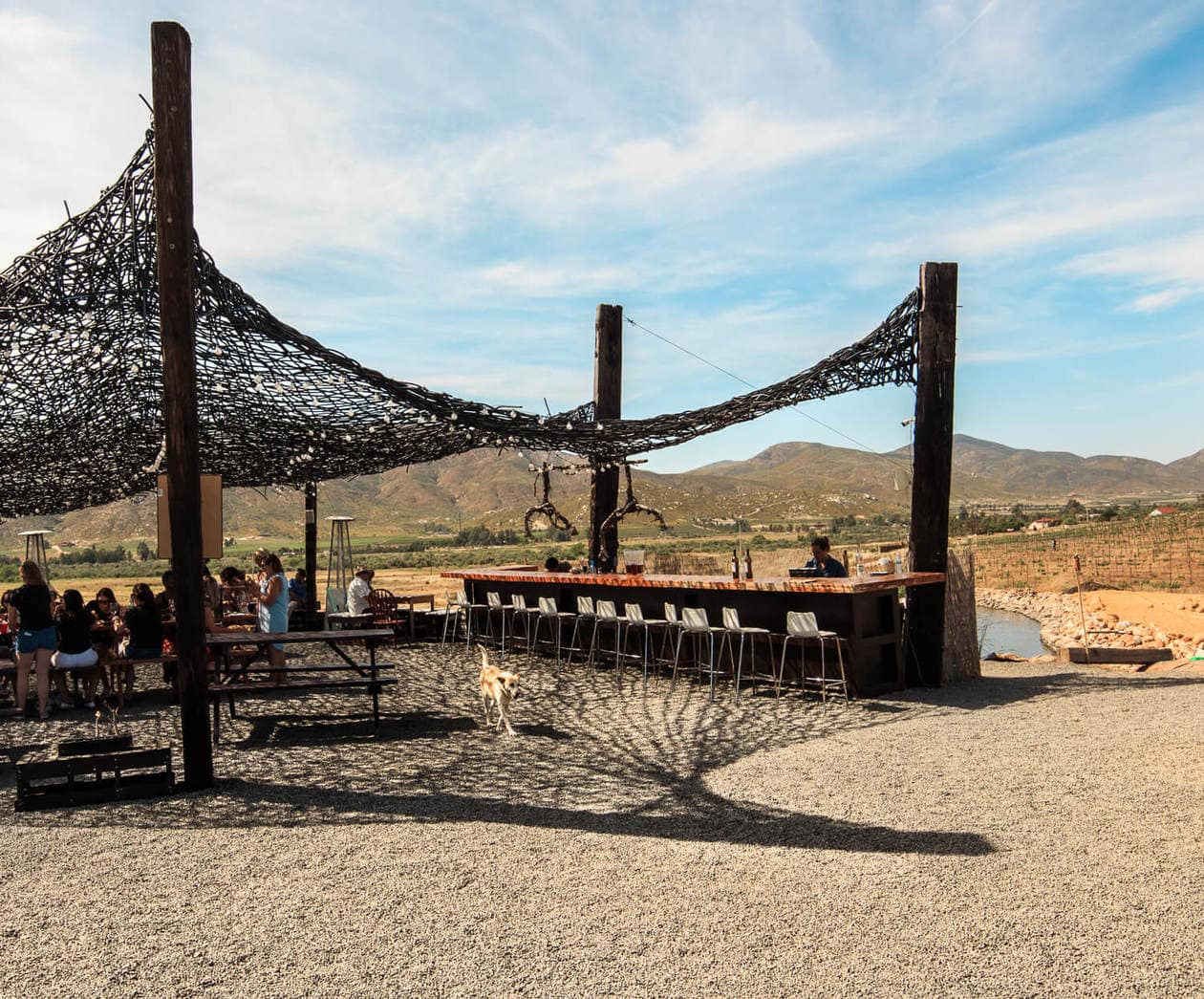 Vena Cava Winery | Wineries in Valle De Guadalupe