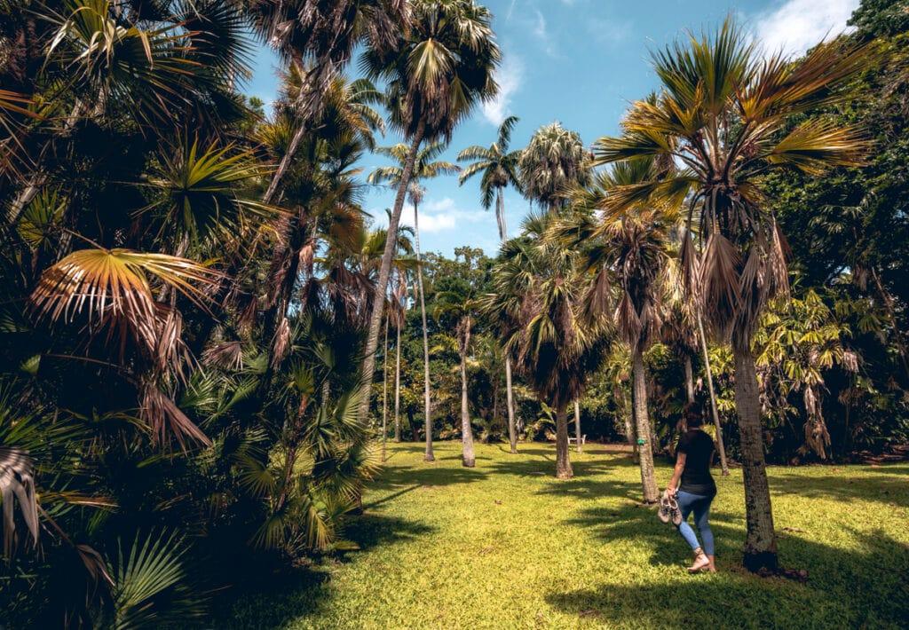 Oahu Botanical Garden