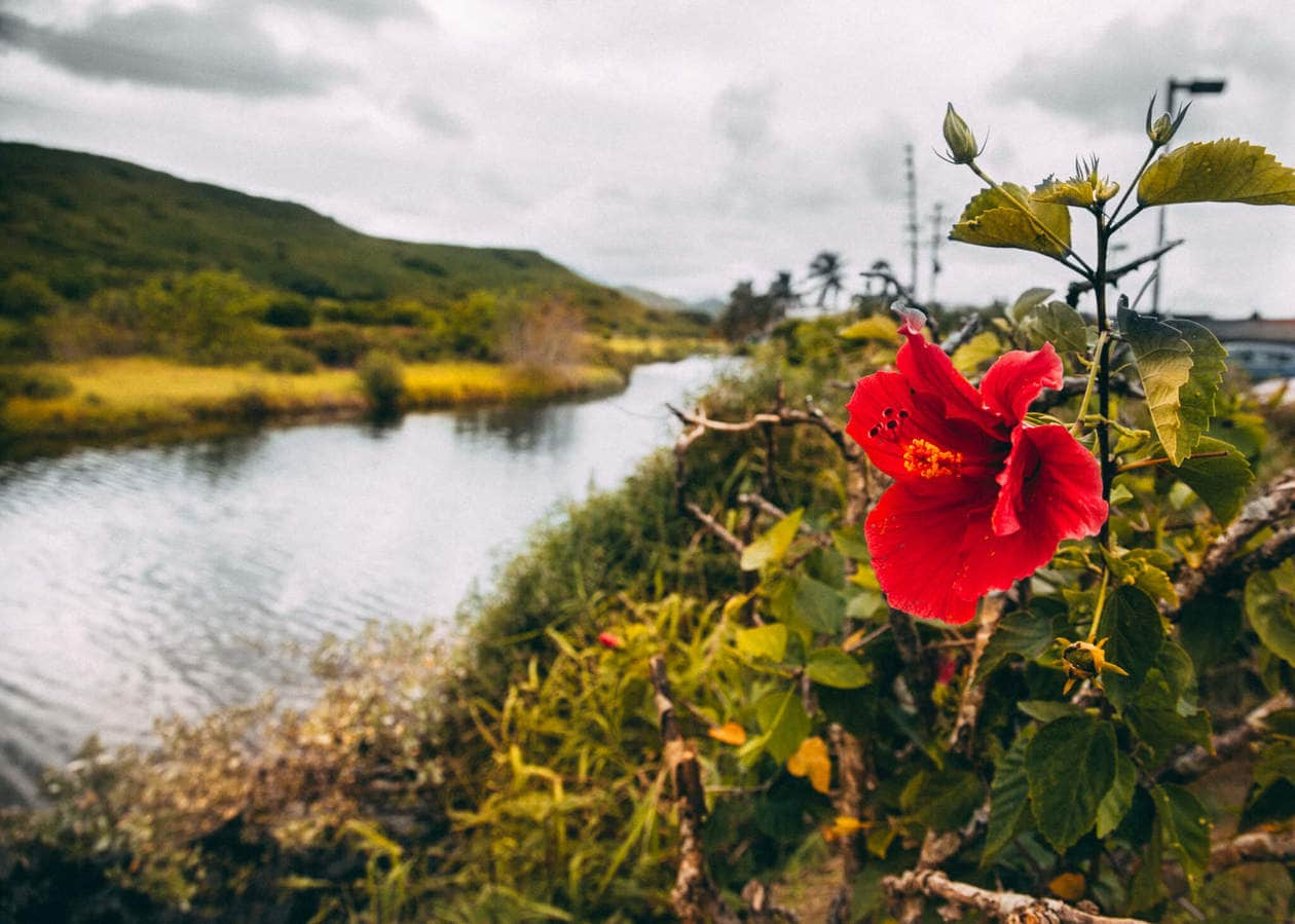 Hamakua Marsh // 20 beautiful pictures of Oahu, Hawaii that capture all of the Aloha vibes; from jungle waterfalls, white sand beaches and colorful sunsets, keep reading to ignite your wanderlust and inspire your next visit to the Hawaiian Islands.