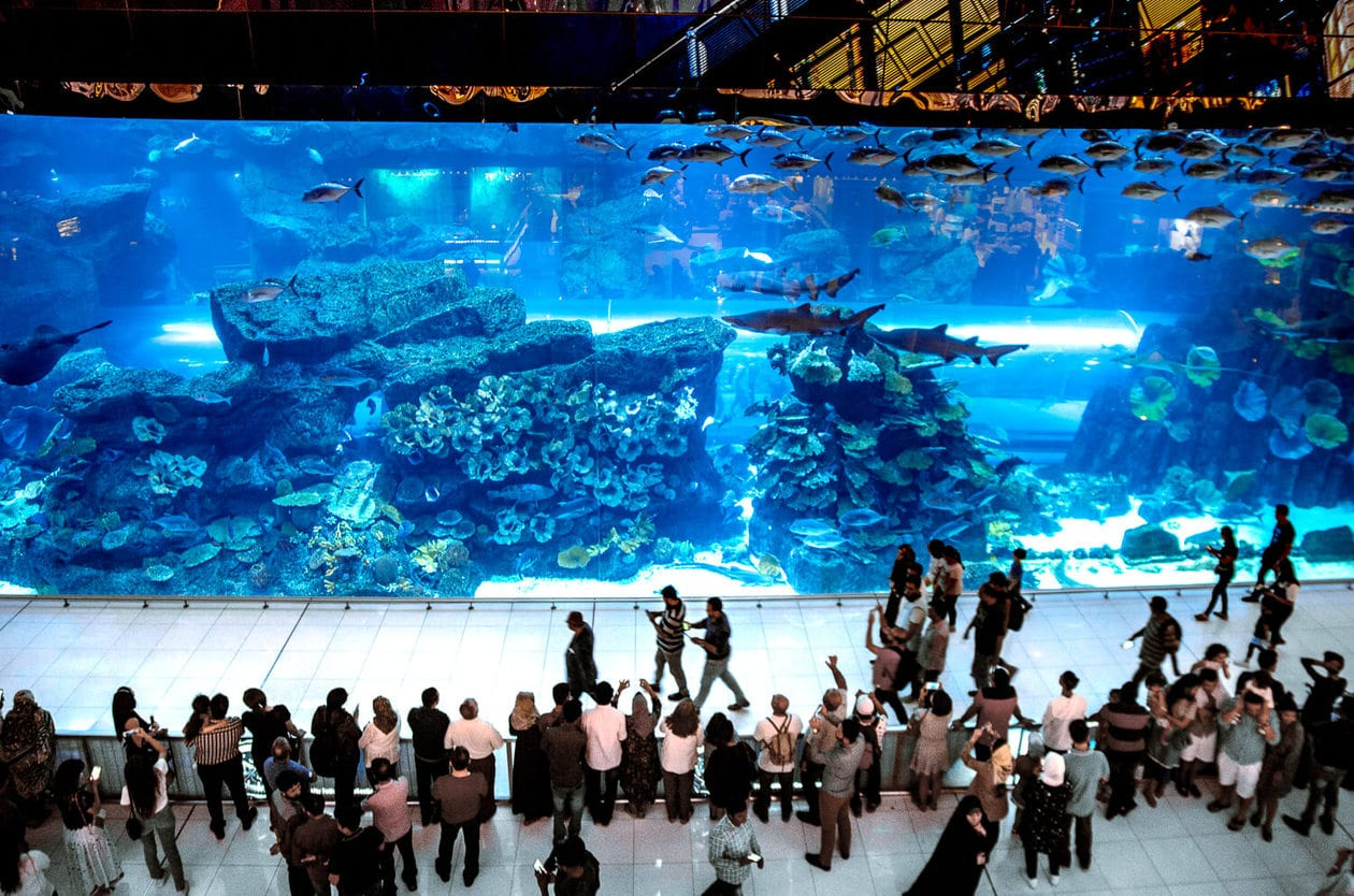 The Dubai Mall Aquarium // A list of the top 10 things to do and places to visit in Dubai. From rooftop bars, to beaches, plus where to find the best views and more.