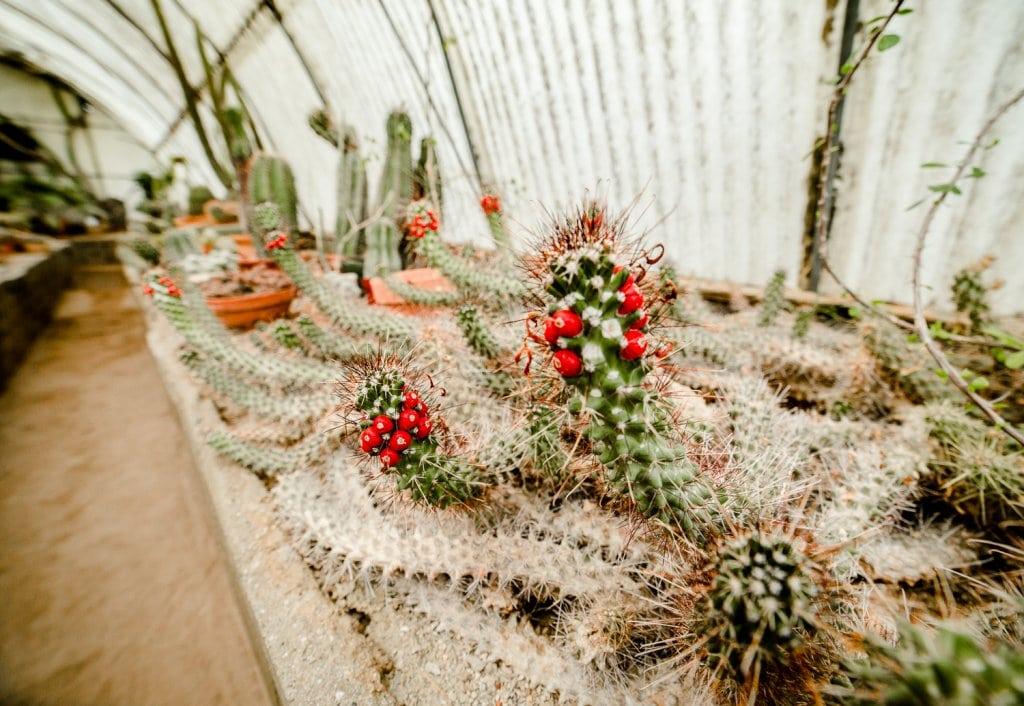 Palm Springs Moorten Botanical Gardens