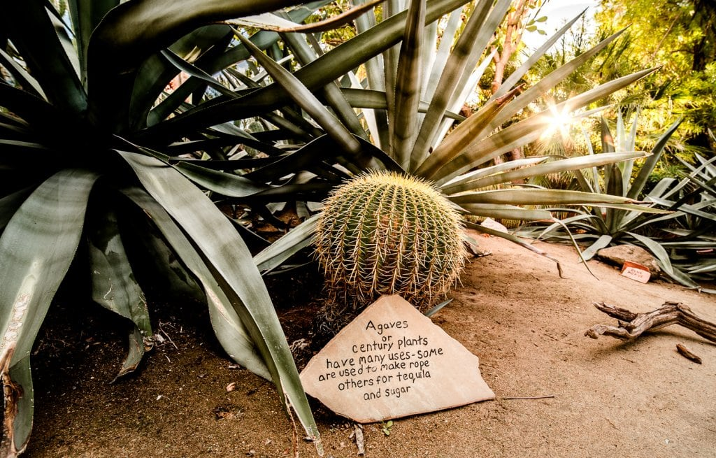 Palm Springs Moorten Botanical Garden