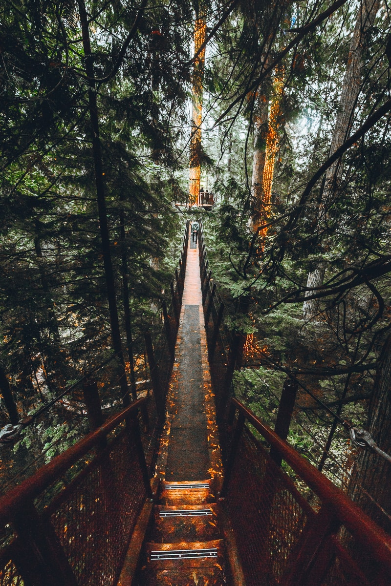 Treetop Adventure in Vancouver
