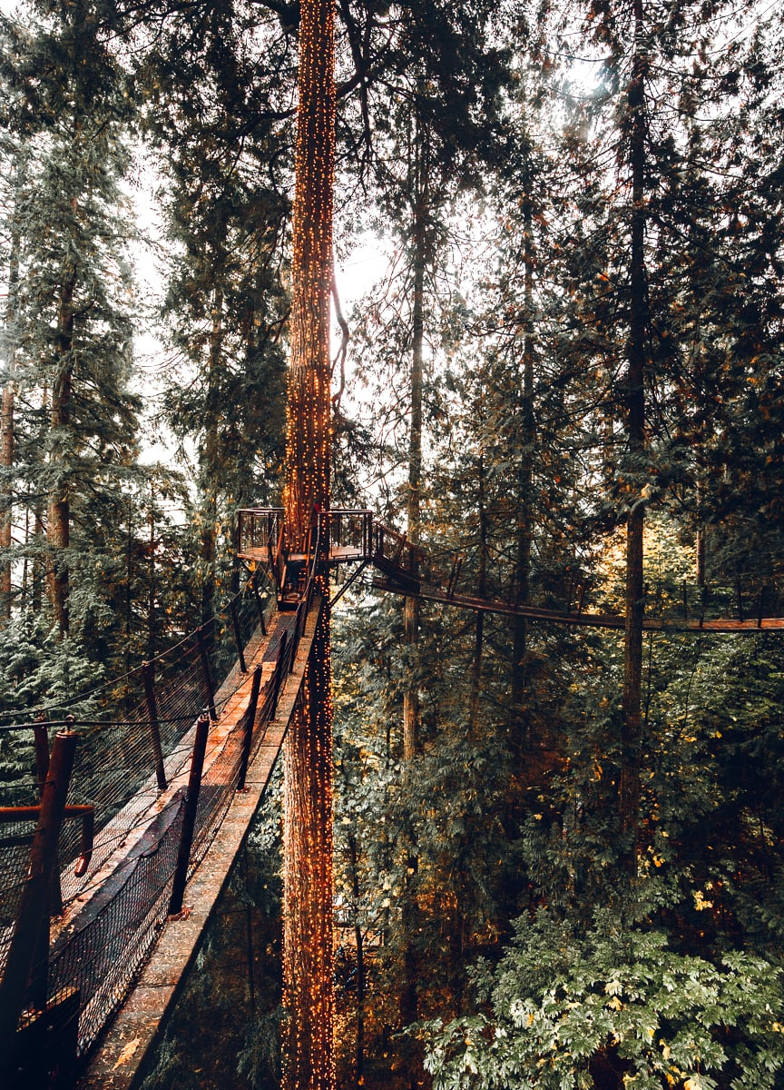 Treetop Adventure Walkway in Vancouver