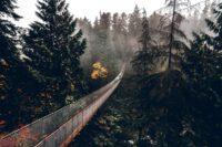 Capilano Suspension Bridge Park Vancouver // A Visitor's Guide
