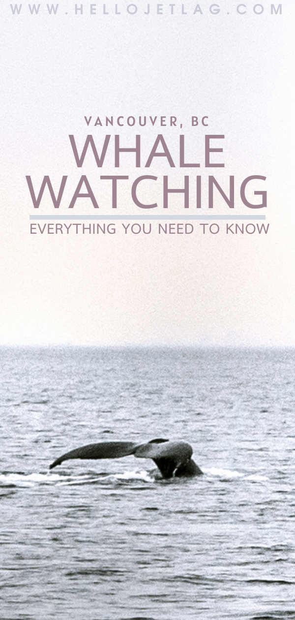 Vancouver Whale Watching Everything you Need to Know