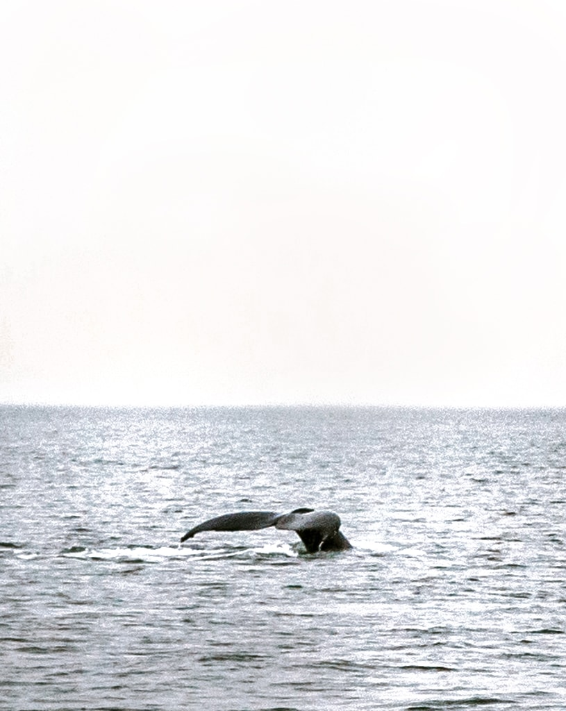 vancouver whale watching