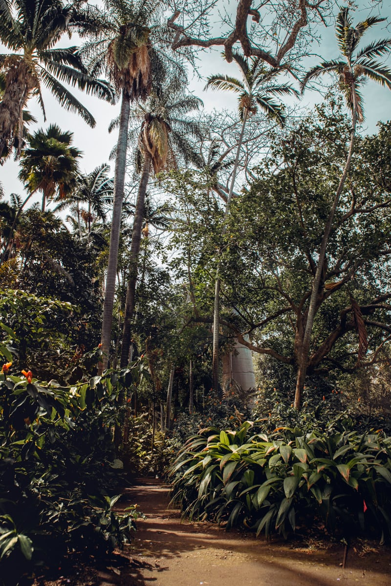 Foster Botanical Garden