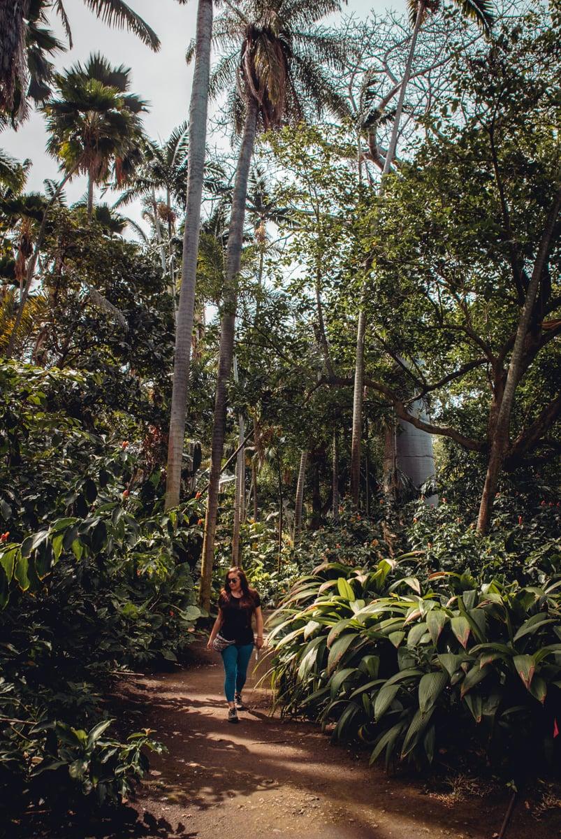 Foster Botanical Garden Oahu