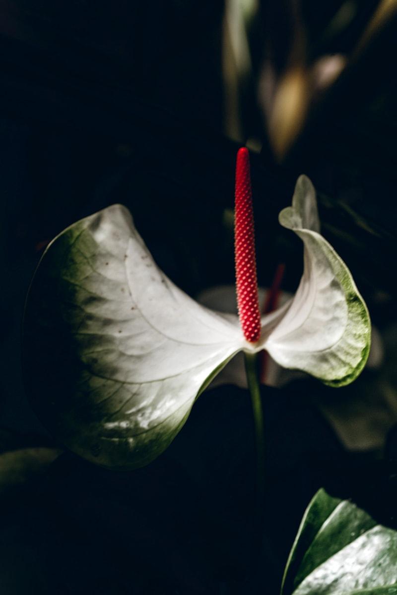 Oahu Flowers