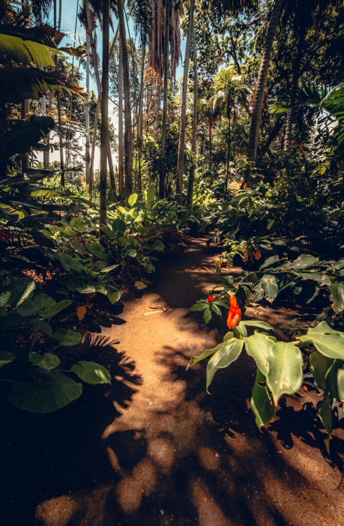 Oahu Plants and Trees