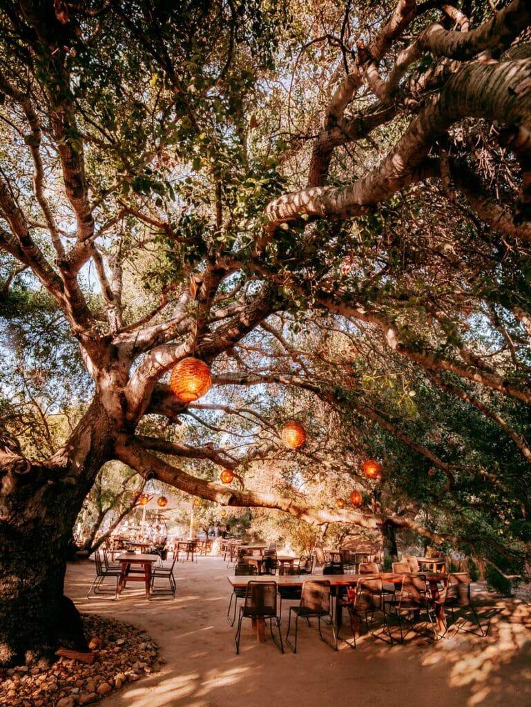 Special Occasion restaurant in Valle de Guadalupe (Primitivo)