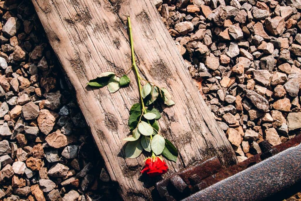 Rose on the train tracks at Birkenau Concentration Camp
