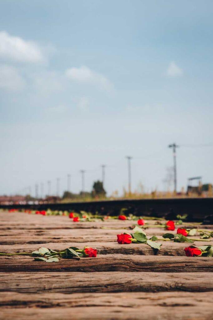 Touring Auschwitz : Roses on the tracks at Birkenau